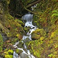 Streaming Through Rainforest Rubble by Adam Jewell