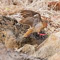Galapagos Dove In Espanola Island. by Marek Poplawski