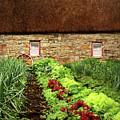 Garden Farm by Vicki Lea Eggen