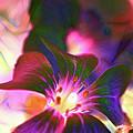 Garden Glow by Francine Collier