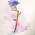 Garden  by Hobbs-Jane Avila