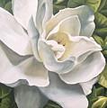 Gardenia by Natalia Tejera