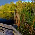 Gator Lake by Jeffrey Hamilton