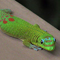 Gecko Up Close by Pamela Walton