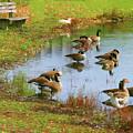 Geese Lake Fall  by Chuck Kuhn