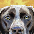 German Short Haired Pointer by David Rogers