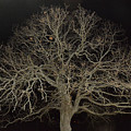 Ghostly  Tree by Mike Fairchild