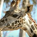 Giraffe by Nicole Badger