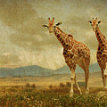 Giraffes In The Meadow by Guy Crittenden