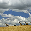 Giraffes On The Horizon by Michele Burgess