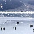 Glacier Bay Alaska by William Gardner