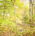 Glimpse Of A Stream In Autumn by A Gurmankin