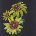 Gloriosa Daisy by Mendy Pedersen