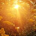 Golden Days Of Autumn by Maria Urso