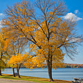 Golden Leaves by John M Bailey