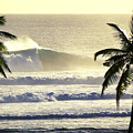 Golden Palms by Sean Davey