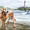 Golden Retriever At The Beach by David Rogers