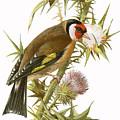 Goldfinch by English School