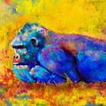 Gorilla Gorilla by Betty LaRue