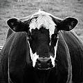 Milk Anyone? by Jenny Regan