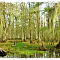Grand Bayou Swamp  by Scott Pellegrin