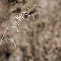 Grass Blade by Steven Ralser