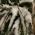 Grass In Snow 2 by Kim Tran