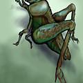 Grasshopper by Kevin Middleton