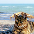 Gray Cat On The Background Of The Sea 1 by Viktor Birkus