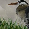 Great Blue Heron by Donald Paczynski