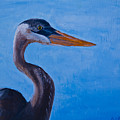 Great Blue Heron  by Roger Wedegis