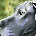 Great Dane  by David Rogers