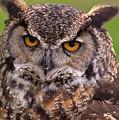 Great Horned Owl by Alexander Rozinov