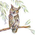 Great Horned Owl  by Amy Kirkpatrick
