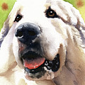 Great Pyrenees by David Rogers