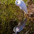 Great White Egret by Zina Stromberg