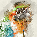 Green And Orange Macaw Bird Digital Watercolor On Photograph by Brandon Bourdages