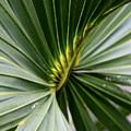 Green Fan by Kenna Westerman