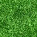 Green Grass by Tilen Hrovatic