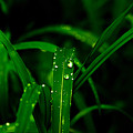 Green Grass  by Totto Ponce