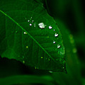 Green Leaf With Raindrops by Totto Ponce