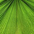 Green Lines by Monika Tymanowska