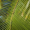 Green Palm Leaf by Ron Dahlquist - Printscapes