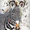 Grevys Zebra, Samburu, Kenya by Humorous Quotes