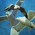 Gulls In Flight by Annette Persinger