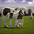 Gypsy Mare And Foal by Elizabeth Sescilla