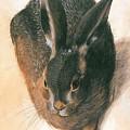 Hare 1528  by Durer Albrecht