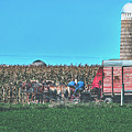 Harvest In Amish Country - Elkhart County, Indiana by Library Of Congress