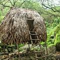 Hawaiian Hale by Nick Difi