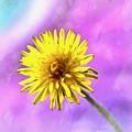 Hello Sunshine by Krissy Katsimbras